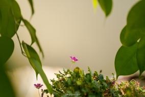 김상균의 식물원 카페 84