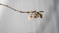 김상균의 식물원 카페 86