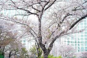 김상균의 식물원 카페 88