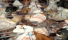 인도네시아, 개고기 업자에 '동물 학대' 징역 10월 첫 판결
