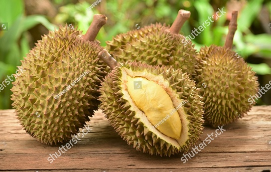 stock-photo-durian-fruit-422852002.jpg