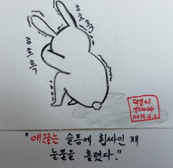 토끼 2.jpg
