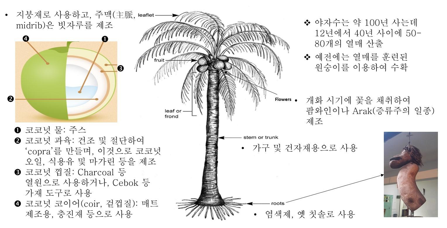 코코넛3.jpg