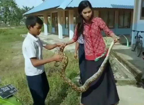 뱀.jpg