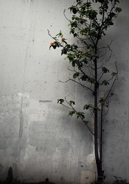 나무.jpg