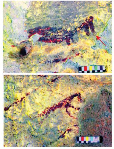 12일 술라웨시섬 동굴 벽화 확대.jpg